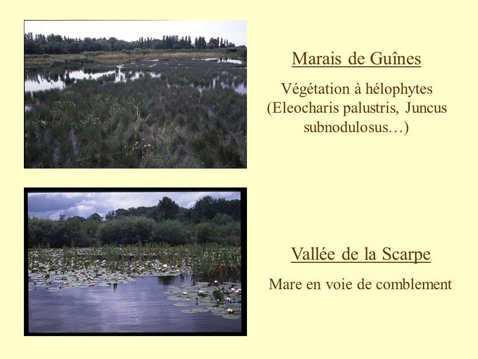 Marais de Guînes Vallée de la Scarpe