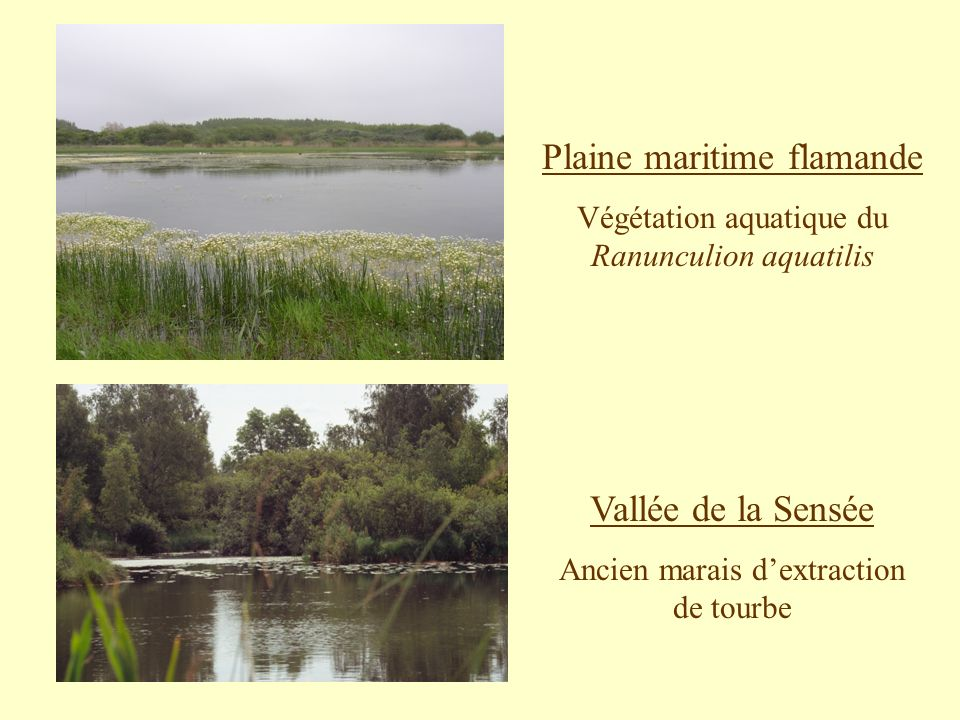Plaine maritime flamande