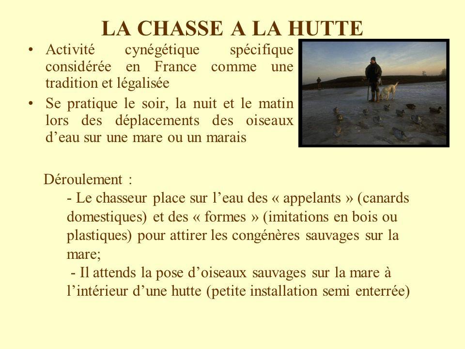 LA CHASSE A LA HUTTE Activité cynégétique spécifique considérée en France comme une tradition et légalisée.