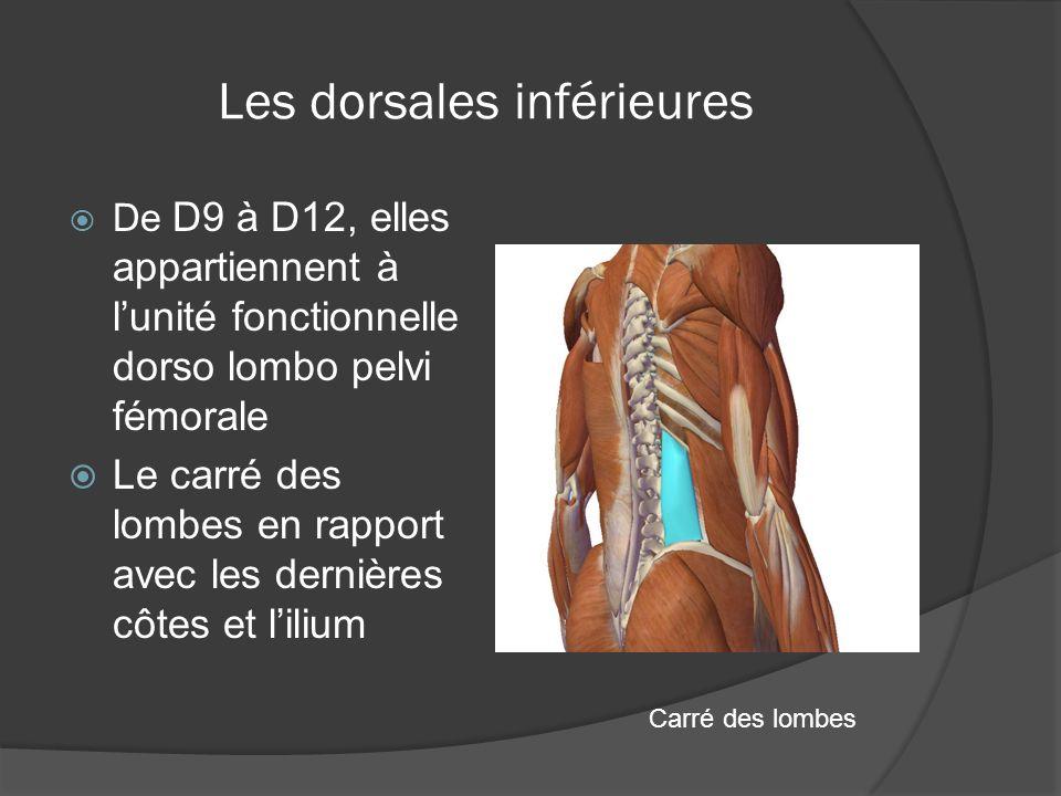Les dorsales inférieures