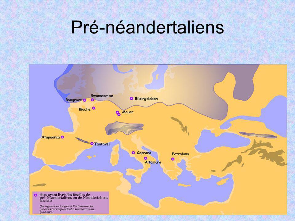 Pré-néandertaliens