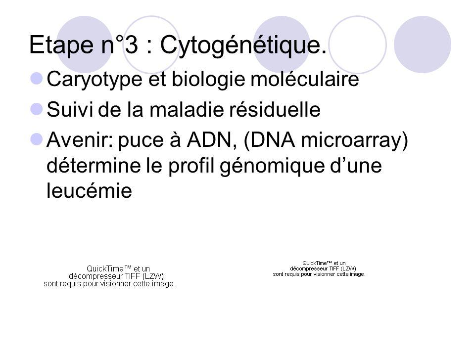 Etape n°3 : Cytogénétique.