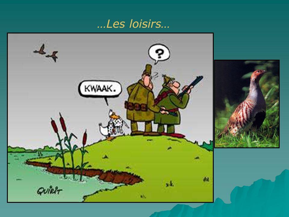 …Les loisirs… Pêche, chasse.Consommation d'animaux contaminés, consommation de plombs de chasse. Les plombs de chasse.