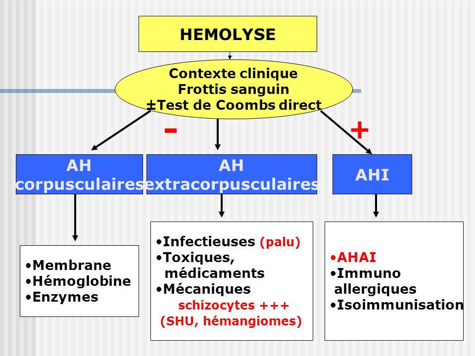 - + HEMOLYSE AH corpusculaires AH extracorpusculaires AHI AHAI