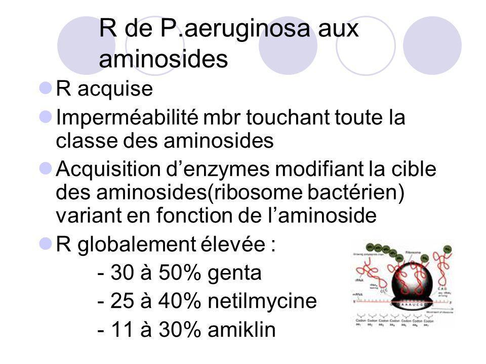 R de P.aeruginosa aux aminosides