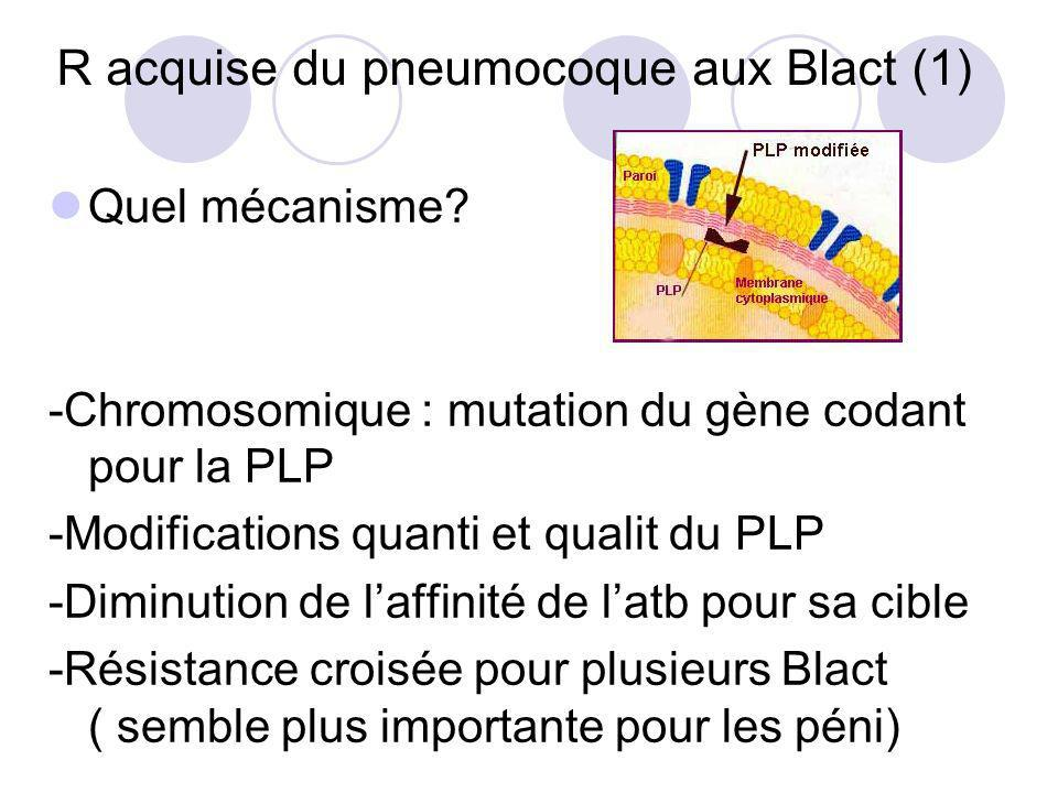R acquise du pneumocoque aux Blact (1)