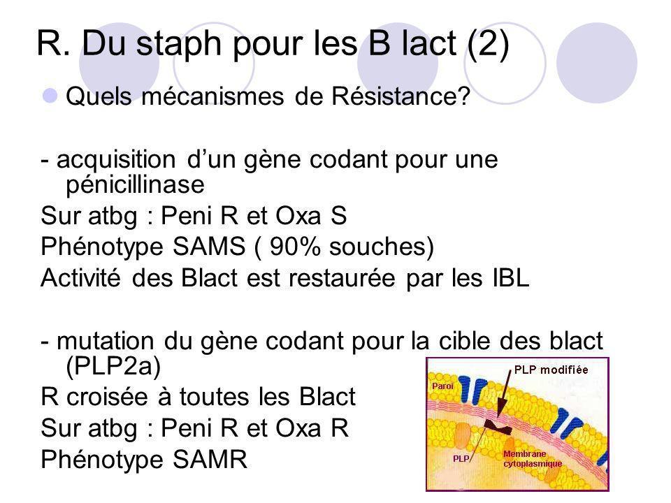 R. Du staph pour les B lact (2)