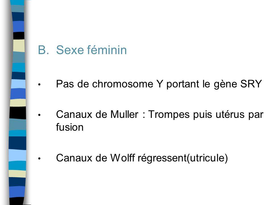 Sexe féminin Pas de chromosome Y portant le gène SRY