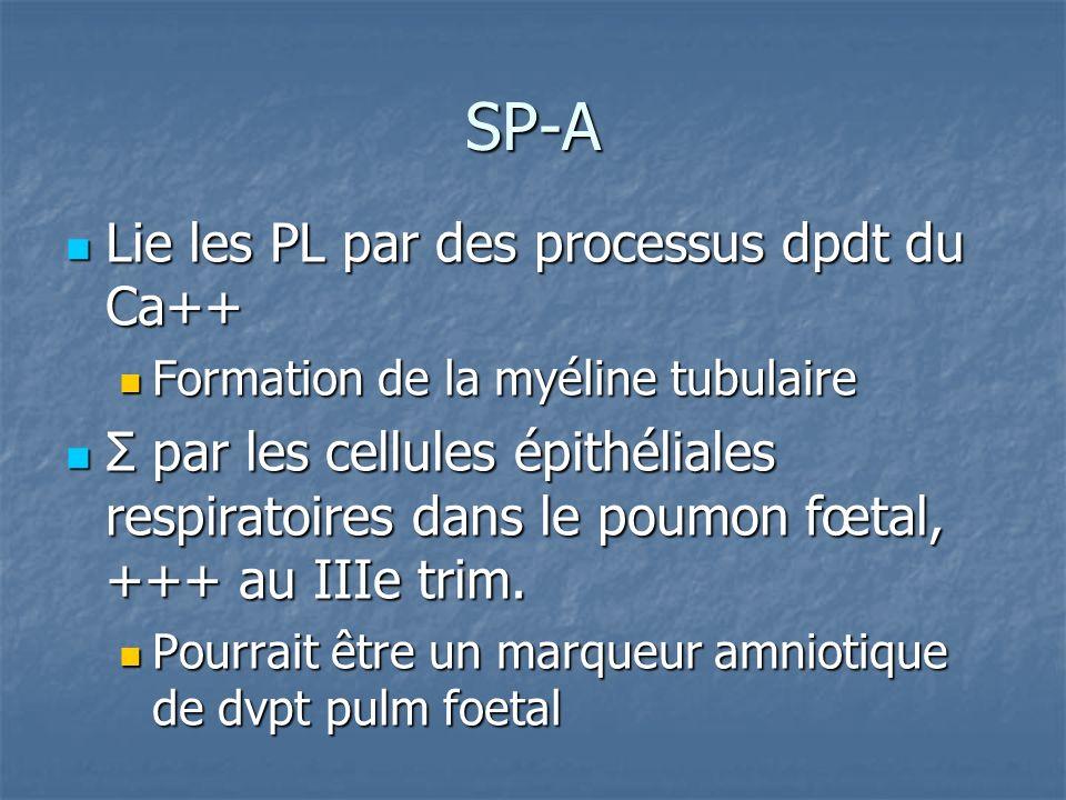 SP-A Lie les PL par des processus dpdt du Ca++