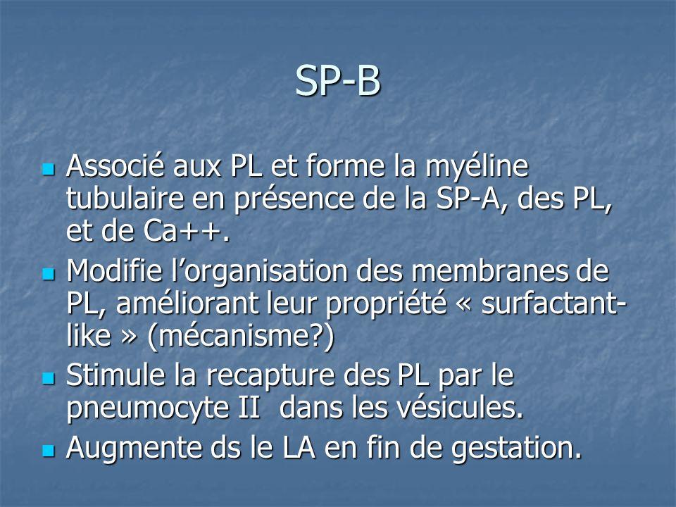 SP-B Associé aux PL et forme la myéline tubulaire en présence de la SP-A, des PL, et de Ca++.