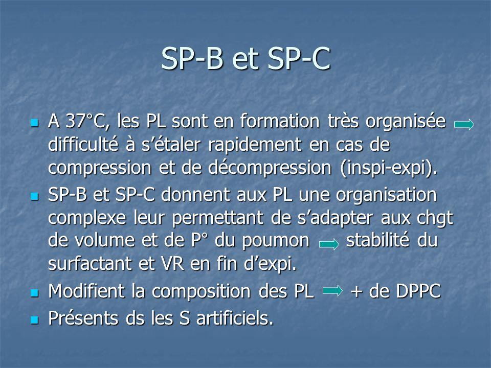 SP-B et SP-C