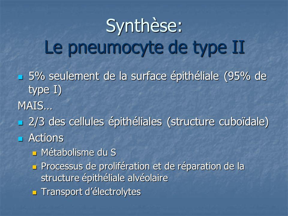 Synthèse: Le pneumocyte de type II