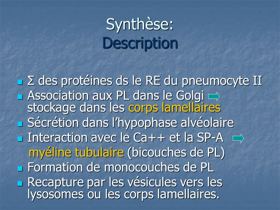 Synthèse: Description