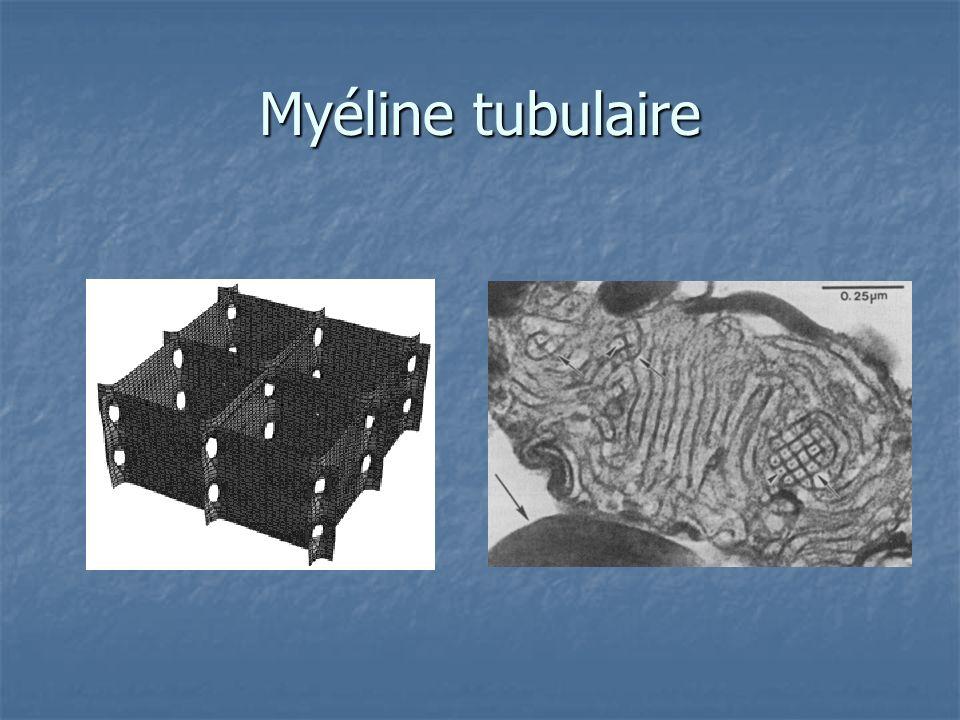 Myéline tubulaire