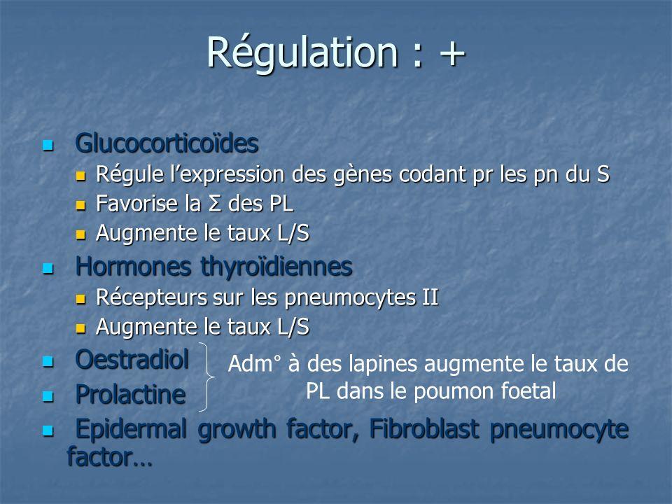 Régulation : + Glucocorticoïdes Hormones thyroïdiennes Oestradiol