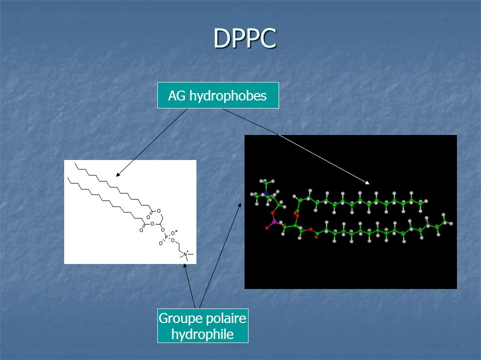 DPPC AG hydrophobes Groupe polaire hydrophile