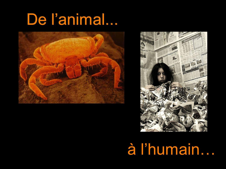 De l'animal... à l'humain…
