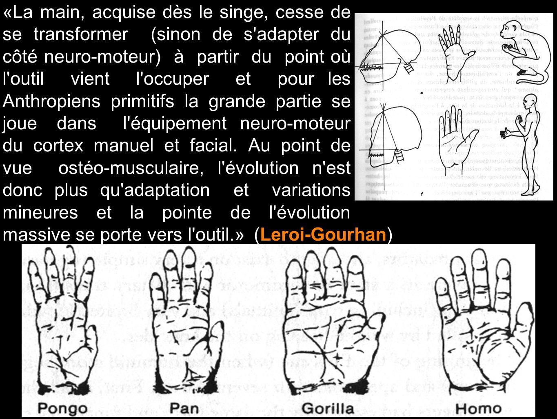 «La main, acquise dès le singe, cesse de se transformer (sinon de s adapter du côté neuro-moteur) à partir du point où l outil vient l occuper et pour les Anthropiens primitifs la grande partie se joue dans l équipement neuro-moteur du cortex manuel et facial. Au point de vue ostéo-musculaire, l évolution n est donc plus qu adaptation et variations mineures et la pointe de l évolution massive se porte vers l outil.»