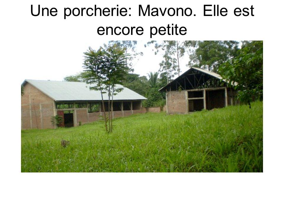 Une porcherie: Mavono. Elle est encore petite