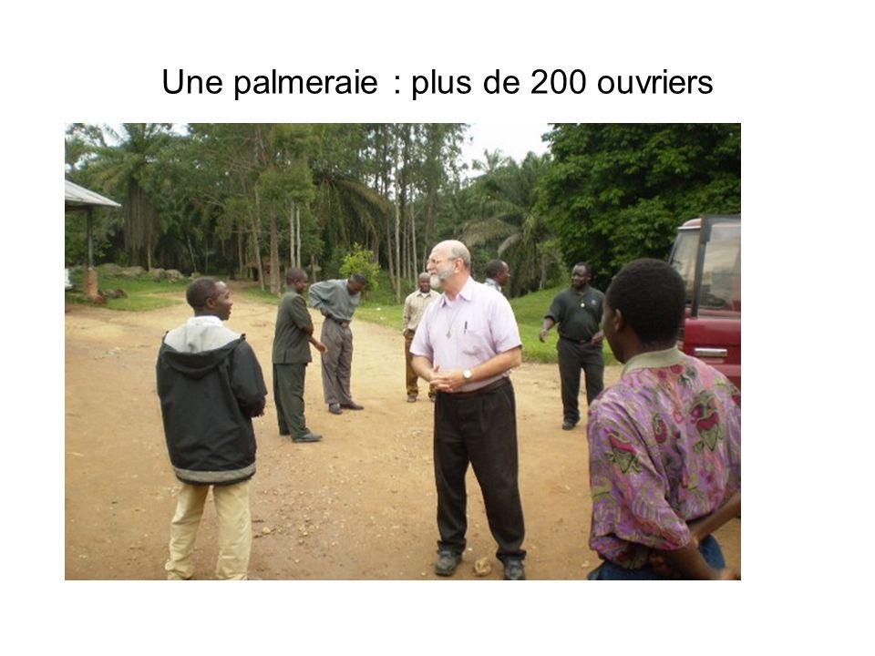 Une palmeraie : plus de 200 ouvriers