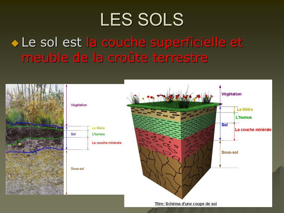 LES SOLS Le sol est la couche superficielle et meuble de la croûte terrestre