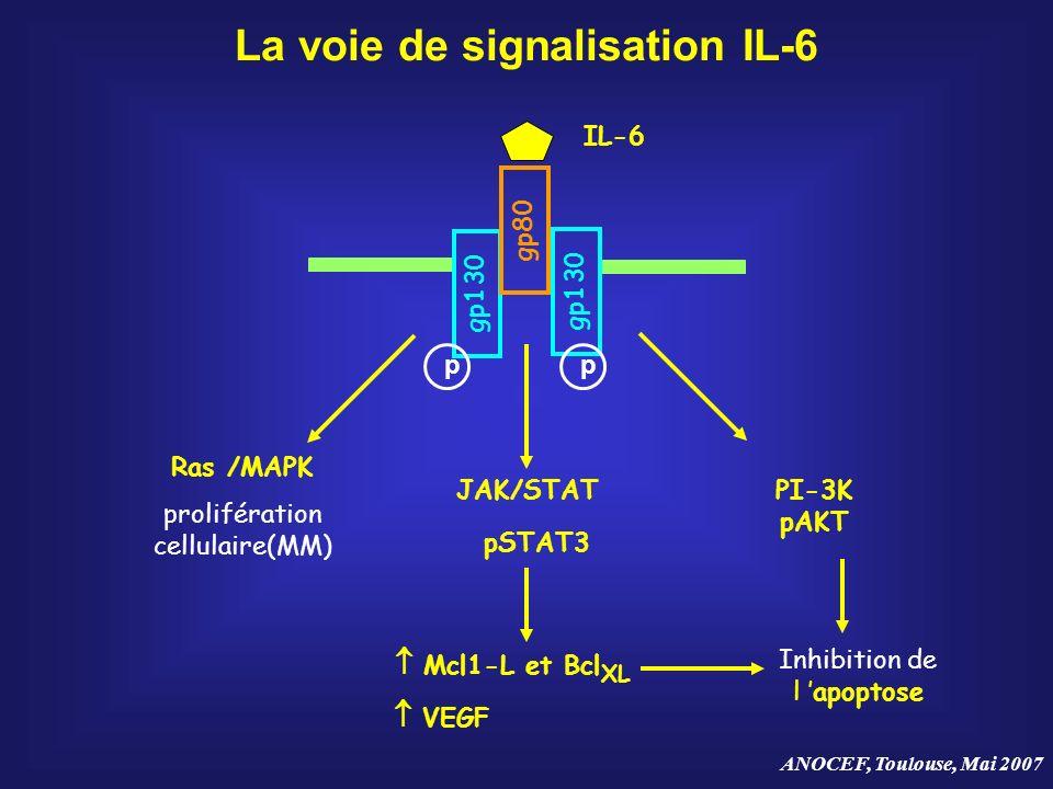 La voie de signalisation IL-6