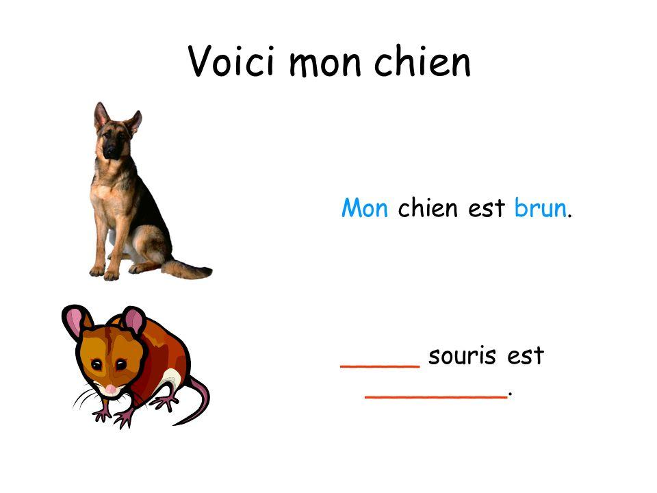 Voici mon chien Mon chien est brun. _____ souris est _________.