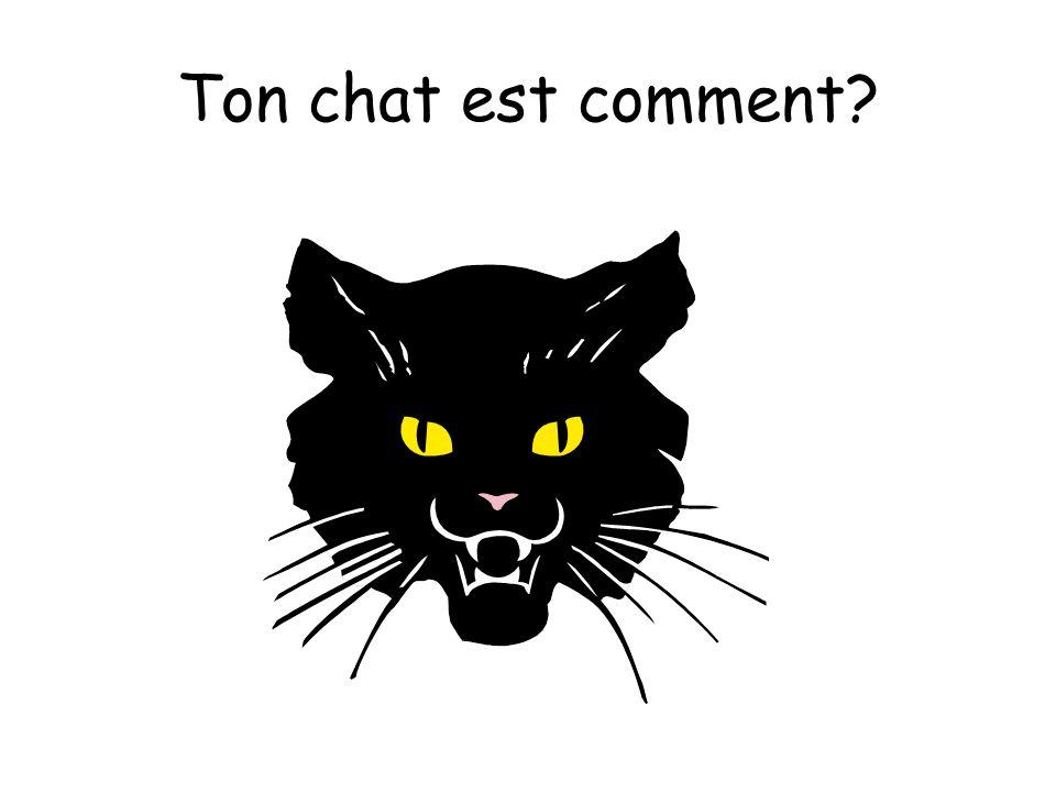 Ton chat est comment