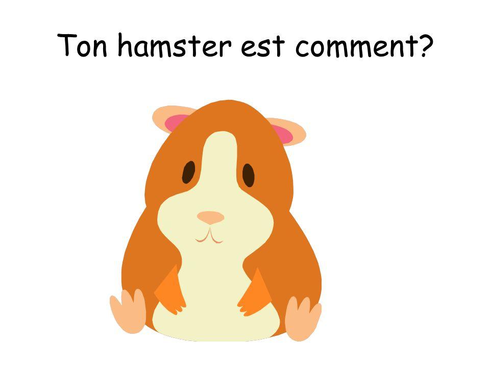 Ton hamster est comment