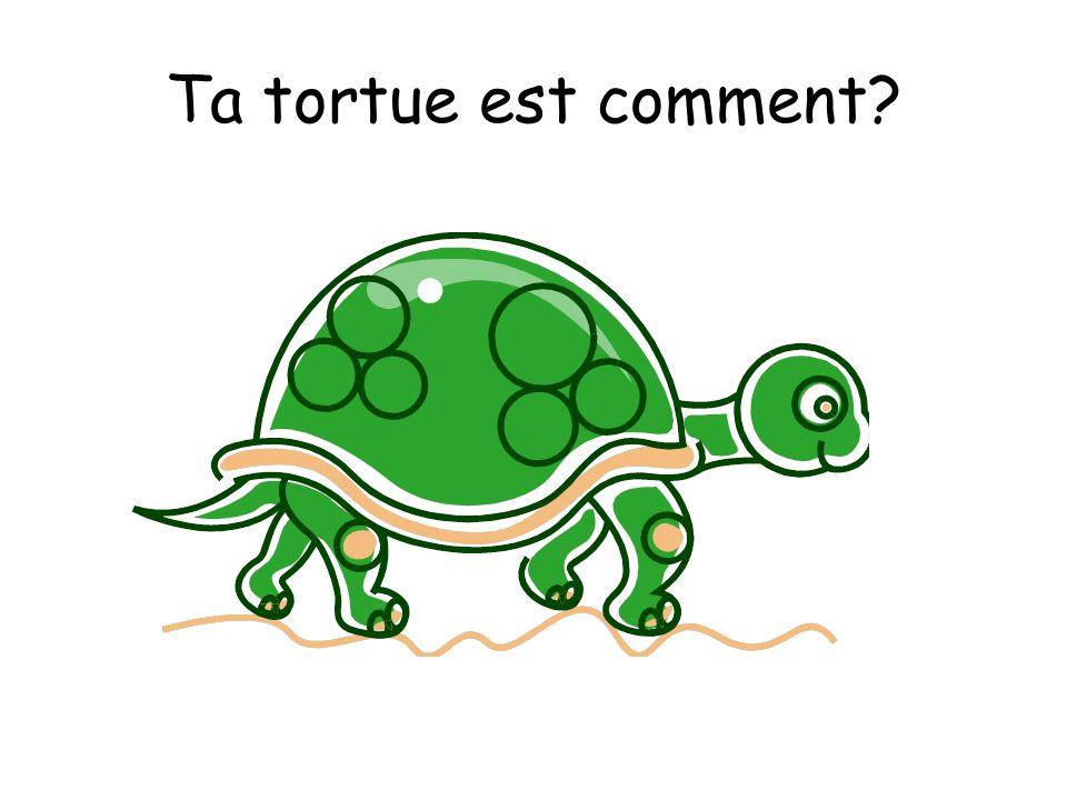 Ta tortue est comment