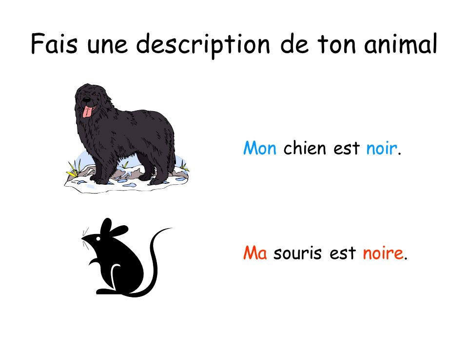 Fais une description de ton animal