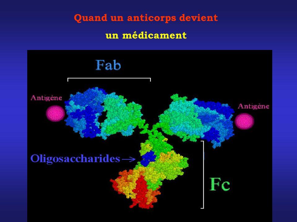 Quand un anticorps devient un médicament
