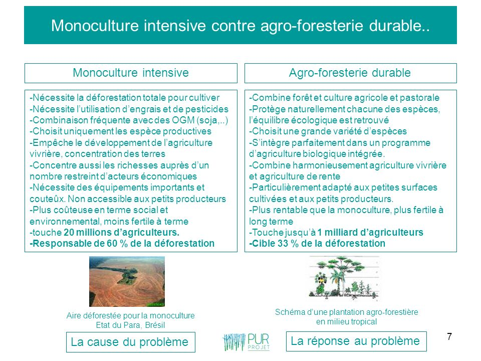 Monoculture intensive contre agro-foresterie durable..