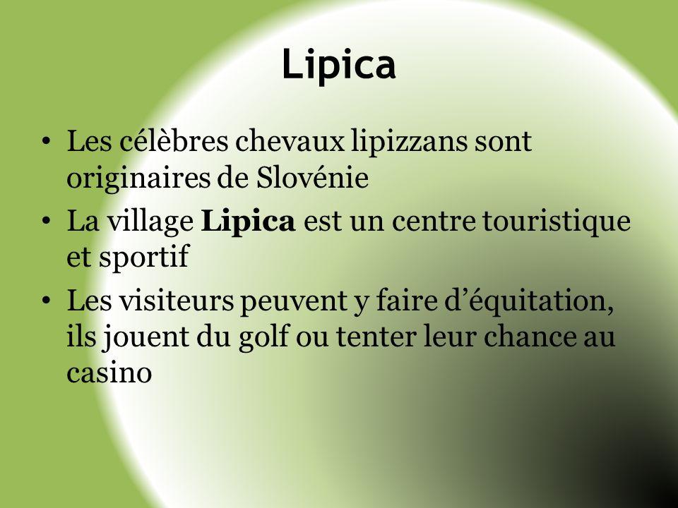 Lipica Les célèbres chevaux lipizzans sont originaires de Slovénie