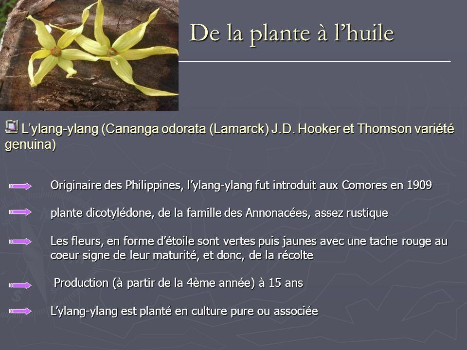 De la plante à l'huileL'ylang-ylang (Cananga odorata (Lamarck) J.D. Hooker et Thomson variété genuina)