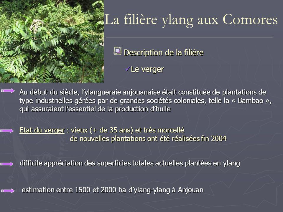 La filière ylang aux Comores