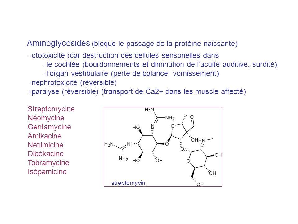 Aminoglycosides (bloque le passage de la protéine naissante)