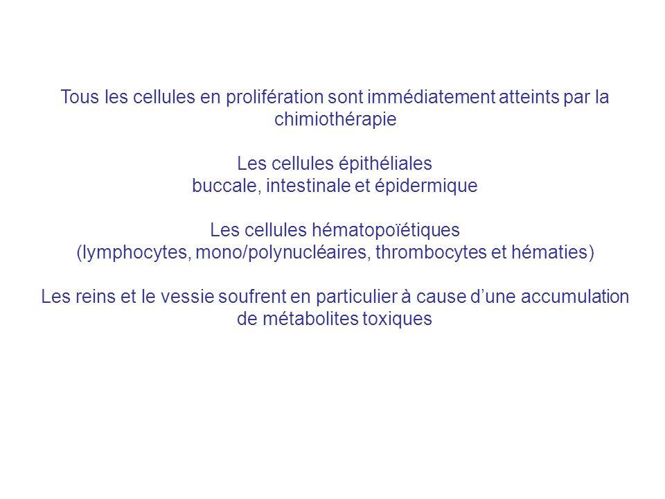 Les cellules épithéliales buccale, intestinale et épidermique