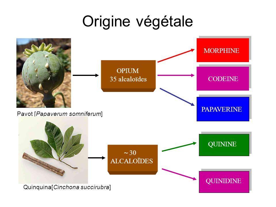 Origine végétale MORPHINE OPIUM 35 alcaloïdes CODEINE PAPAVERINE