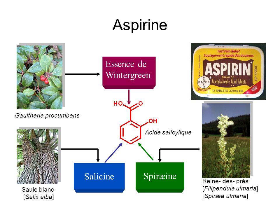 Aspirine Essence de Wintergreen Salicine Spiræine