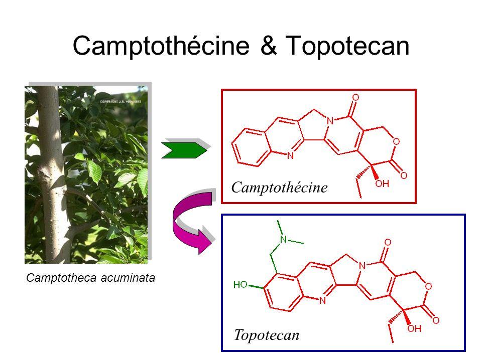 Camptothécine & Topotecan