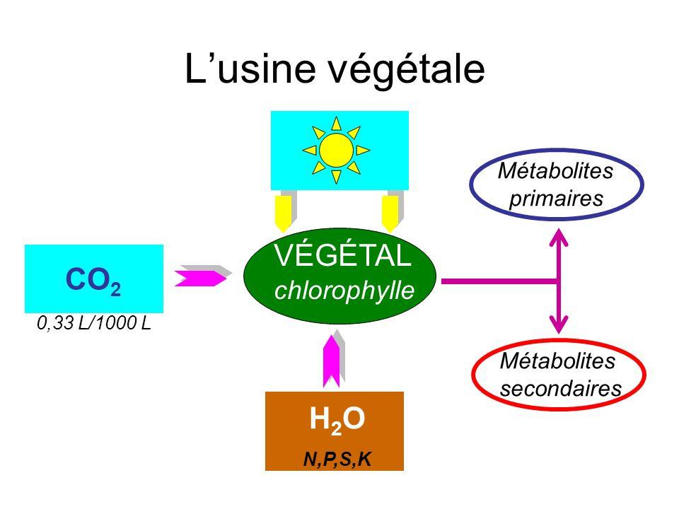 L'usine végétale VÉGÉTAL CO2 CO2 H2O chlorophylle Métabolites
