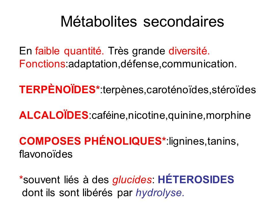 Métabolites secondaires