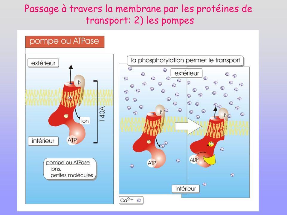 Passage à travers la membrane par les protéines de