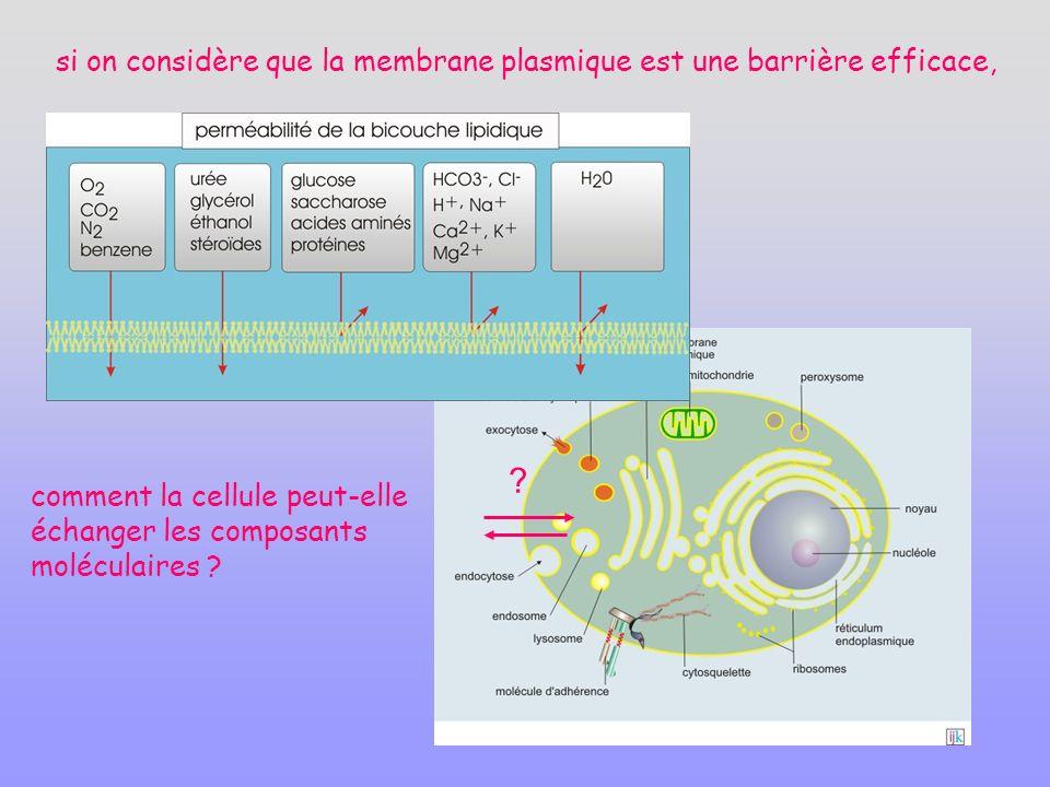 si on considère que la membrane plasmique est une barrière efficace,