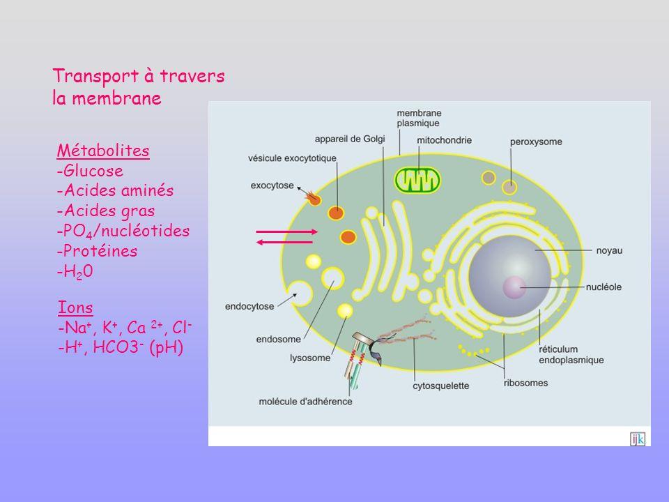 Transport à travers la membrane Métabolites Glucose Acides aminés