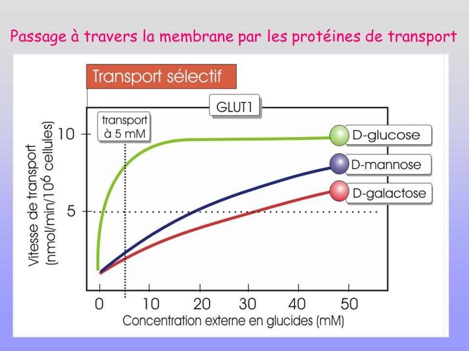 Passage à travers la membrane par les protéines de transport