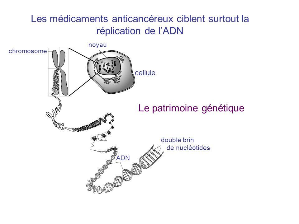 Les médicaments anticancéreux ciblent surtout la réplication de l'ADN