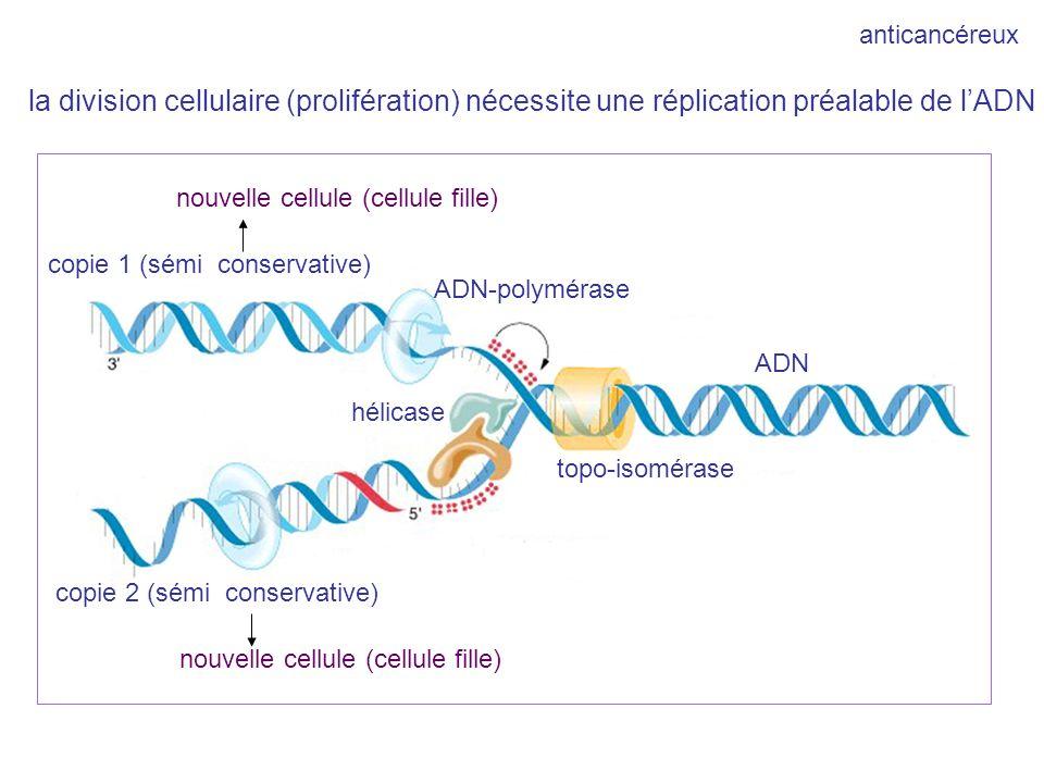 anticancéreux la division cellulaire (prolifération) nécessite une réplication préalable de l'ADN. nouvelle cellule (cellule fille)