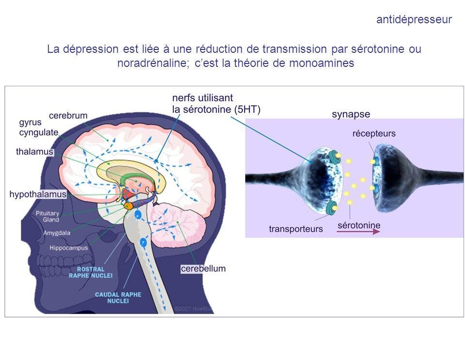 noradrénaline; c'est la théorie de monoamines
